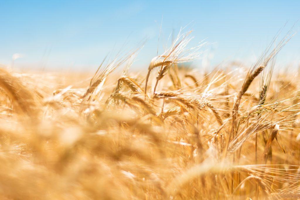 Solution pour regrouper dettes exploitations agricoles